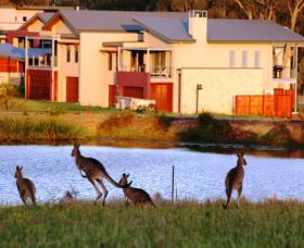 Grand Mercure The Vintage Hunter Valley - Wagga Wagga Accommodation