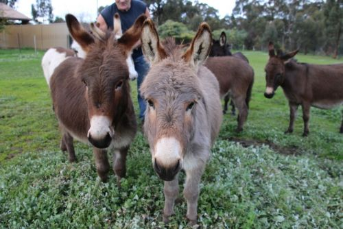 Donkey Tales Farm Cottages - Wagga Wagga Accommodation