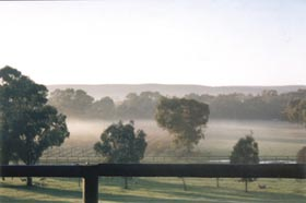 Settlers Rest Farmstay Swan Valley - Wagga Wagga Accommodation