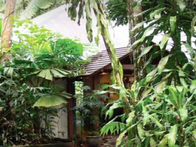 Heritage Lodge and Spa - In the Daintree - Wagga Wagga Accommodation