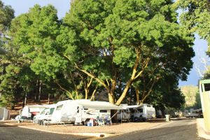 Williamstown Queen Victoria Jubilee Park - Wagga Wagga Accommodation