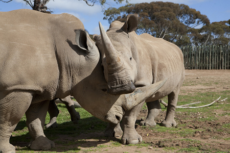 Monarto Zoo - Wagga Wagga Accommodation
