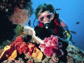 Gold Coast Seaway Dive Site