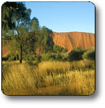 Uluru - Kata Tjuta National Park - Wagga Wagga Accommodation
