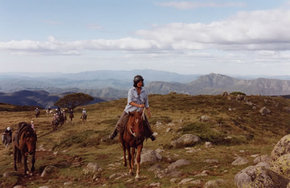 High Country Horses - Wagga Wagga Accommodation