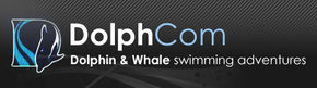 Dolphcom - Dolphin  Whale Swimming Adventures - Wagga Wagga Accommodation