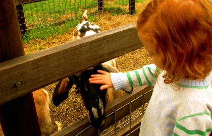 Collingwood Children's Farm - Wagga Wagga Accommodation