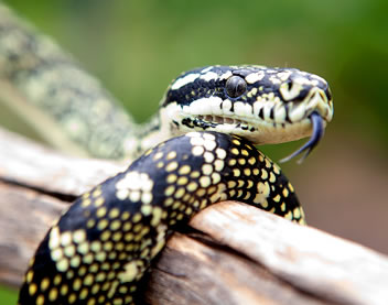 Reptile Encounters - Wagga Wagga Accommodation