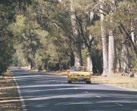Ludlow Tuart Forest - Wagga Wagga Accommodation