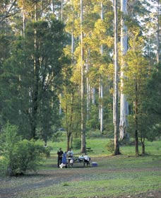 Big Brook Arboretum - Wagga Wagga Accommodation