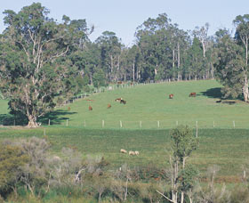 Scenic Drives - Bunbury Collie Donnybrook - Wagga Wagga Accommodation