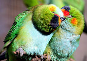 Rainbow Jungle - The Australian Parrot Breeding Centre - Wagga Wagga Accommodation