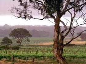 Yangarra Estate Vineyard - Wagga Wagga Accommodation