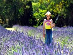 Brayfield Park Lavender Farm - Wagga Wagga Accommodation