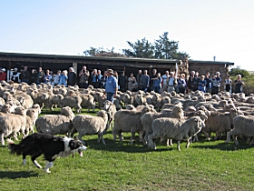 Curringa Farm - Accommodation and Farm Tours - Wagga Wagga Accommodation