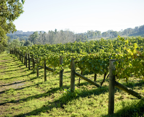 Surveyor's Hill Vineyards - Wagga Wagga Accommodation