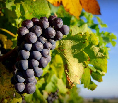 Panorama Vineyard - Wagga Wagga Accommodation