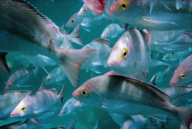 The Scottish Prince Dive Site