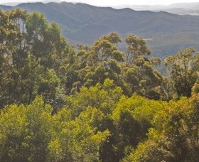 Conondale National Park - Wagga Wagga Accommodation
