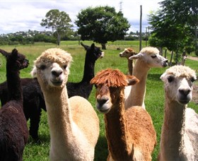 Banyandah Alpacas - Wagga Wagga Accommodation