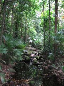 Mossman Gorge Rainforest Circuit Track Daintree National Park - Wagga Wagga Accommodation