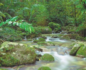 Mossman Gorge Daintree National Park - Wagga Wagga Accommodation