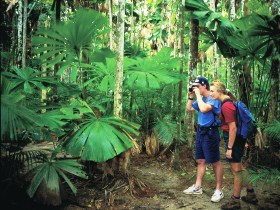 Mount Sorrow Ridge Trail Daintree National Park - Wagga Wagga Accommodation