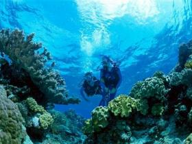 Coral Gardens Dive Site - Wagga Wagga Accommodation