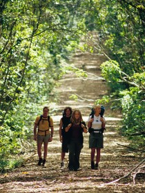 Wet Tropics Great Walk - Wagga Wagga Accommodation