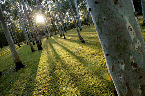 Tondoon Botanic Gardens - Wagga Wagga Accommodation
