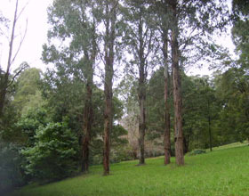 Mount Dandenong Arboretum - Wagga Wagga Accommodation
