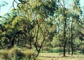 Leaghur State Park - Wagga Wagga Accommodation