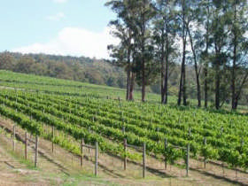 Piedmont Vineyard