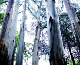 Dandenong Ranges National Park - Wagga Wagga Accommodation