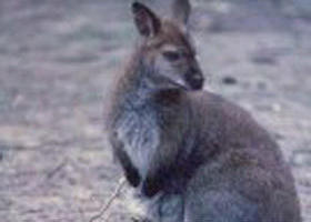 Churchill National Park - Wagga Wagga Accommodation