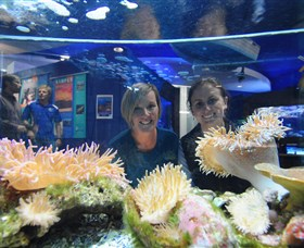 Solitary Islands Aquarium - Wagga Wagga Accommodation