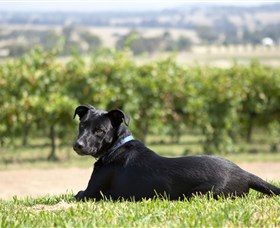 Moothi Estate Vineyard and Cellar Door - Wagga Wagga Accommodation