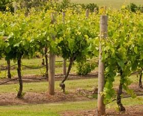 Mt Coghill Vineyard - Wagga Wagga Accommodation