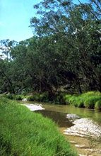 Salvator Rosa Section - Carnarvon National Park - Wagga Wagga Accommodation