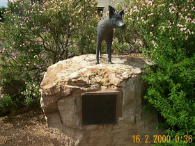 Dingo Statue - Wagga Wagga Accommodation