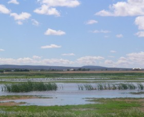 Fivebough Wetlands - Wagga Wagga Accommodation