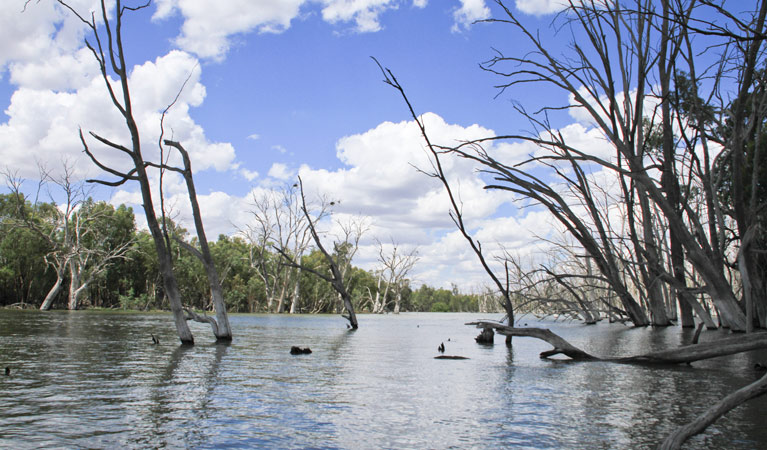 Murrumbidgee Valley National Park - Wagga Wagga Accommodation