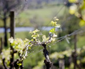 Mountainside Wines - Wagga Wagga Accommodation