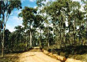 Paddys Ranges State Park - Wagga Wagga Accommodation