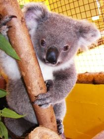 Cooberrie Park Wildlife Sanctuary - Wagga Wagga Accommodation