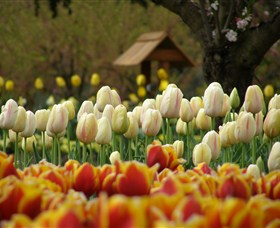 Tulip Top Gardens - Wagga Wagga Accommodation