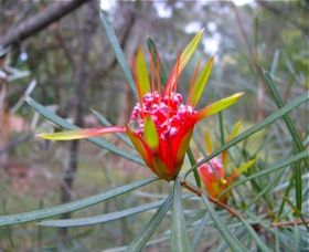 Glenbrook Native Plant Reserve and Nursery - Wagga Wagga Accommodation