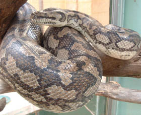 Armadale Reptile Centre - Wagga Wagga Accommodation