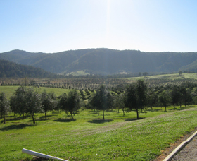 Hastings Valley Olives - Wagga Wagga Accommodation