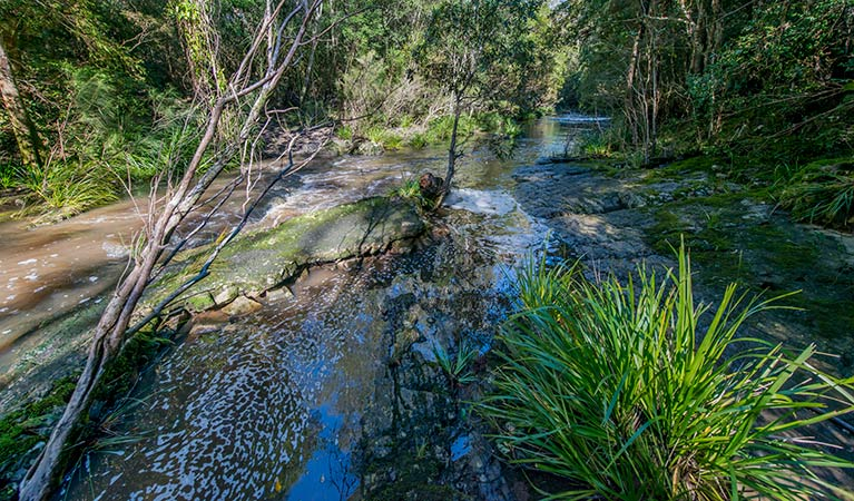 Dawson River walking track - Wagga Wagga Accommodation
